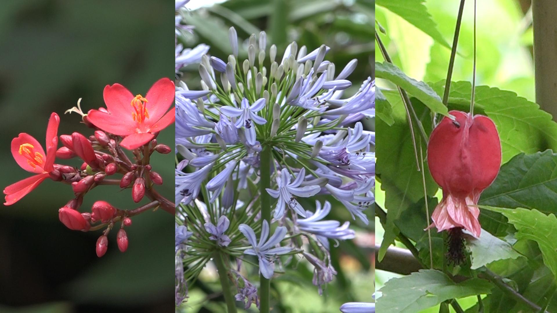 動植物公園5月之花(拍攝、剪接:劉澤浩)